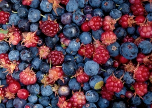 Raspberries, Blueberries, and Salmonberries from Alaska